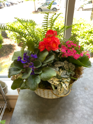 Waterfall Garden  in Hermitage, TN | IN FULL BLOOM FLOWERS + GIFTS