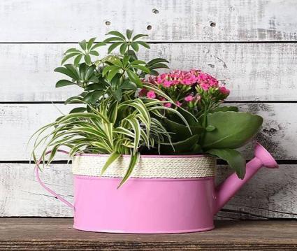 Watering Can  Indoor Planter