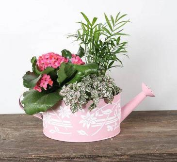 Watering Can Mother's Day Special