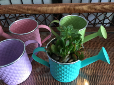 Watering Can Succulent Garden  Succulents/planter