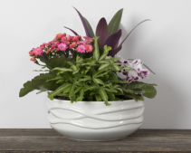 Wave Bowl Plants and Flowers