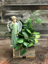 Weeping Angel Dish Garden