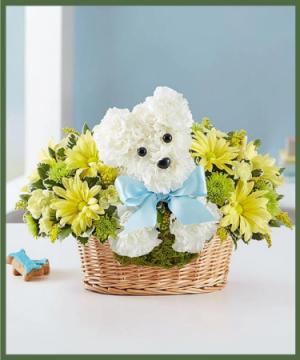 Welcome Baby Boy Love Pup in Arlington, TX | Lige Green Flowers