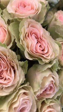 Welcome Flower Affair Customerss title t2