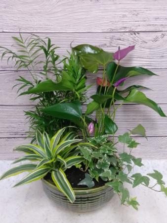 Green tropical  Dish Garden