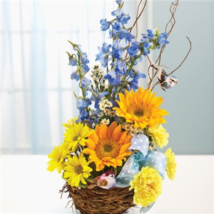Welcome To The Nest Baby Boy™  in Valley City, OH | HILL HAVEN FLORIST & GREENHOUSE