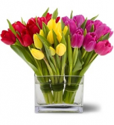 WF 327 Spring Tulips Double
