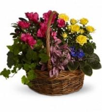 WF104 Spring Flower Plants