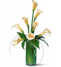 WF160 8 White Calla Lilies