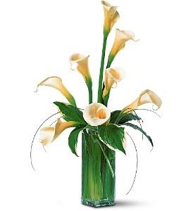 WF160 8 White Calla Lilies in Westford, MA | WESTFORD FLORIST