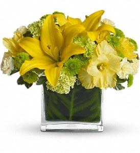 WF173 Yellow Lilies & Green Hydrangea