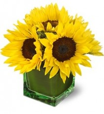 WF188 Just Sun Flowers