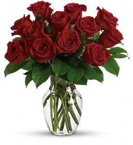 WF229 12 Red Roses