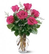 WF250 6 Hot Pink Roses