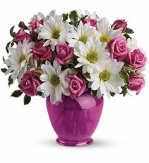 WF256 Daisies & Spray Roses