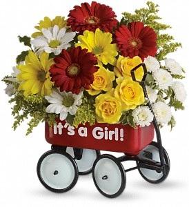 WF345 Teleflora's Baby Girl Wow Wagon Bouquet