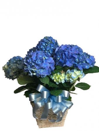 "WFE 302 Blue Hydrangea 8"""