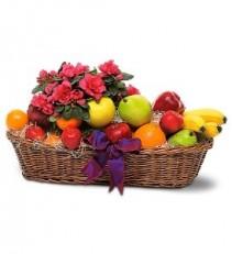 WFG111 Fruit & Flower Plant Basket