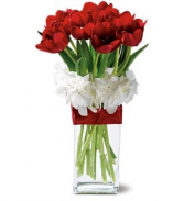 WFV 102  Red Tulips