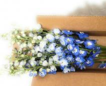 When You're Feeling Blue Wrap arrangement