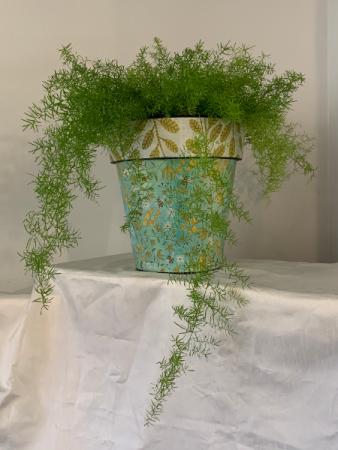 Whimsical Bumblebee w/ asparagus fern Plant