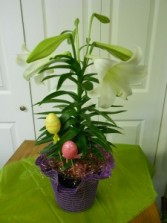 Whimsical Easter Lily Plant
