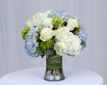 white  and blue hydrenga