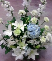 White and blue triumpn, MO-112 Fresh floral