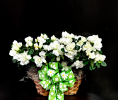 White Azalea Cheerful Basket