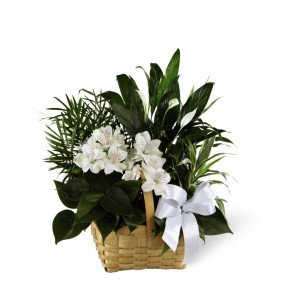 Assorted Green Plants with Fresh white flowers Dish Garden