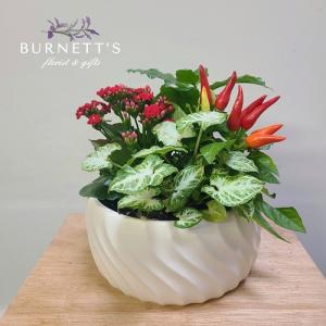 White Ceramic Planter in Kelowna, BC   Burnett's Florist
