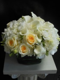 White & Cream EN-41
