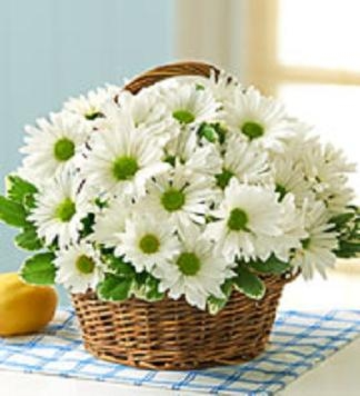 White Daisy Basket Long Lasting Natural Beauty, starts @ $29.99