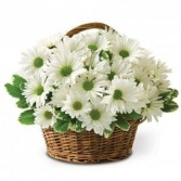 White Daisy Basket Also available in Yellow or Lavender