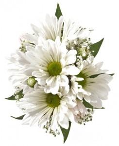 White Daisy Corsage Corsage