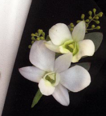 White Dandrobium Orchid Boutineer