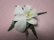 White Dendrobium Orchid Boutonierre, $12.50