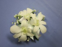White Dendrobium Orchids,  $25.00