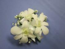 3 White Dendrobium Orchids, $25.00