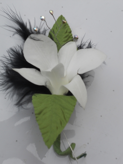 White Dendrobium Orchids with Black Feathers