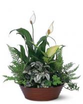 White Garden Plant