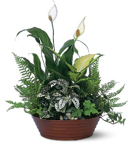 White Garden Plants