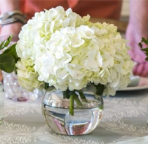 White Hydrangea in bubble bowl Fresh Flowers