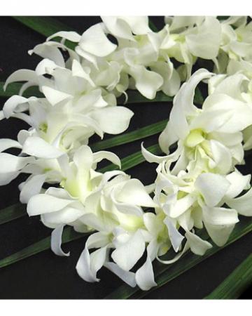 White Lei
