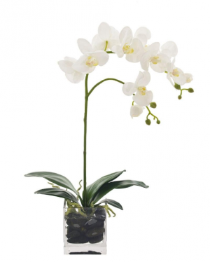 White Orchid  in Tulsa, OK   THE WILD ORCHID FLORIST