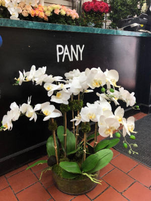White Orchid Arrangement   in New York, NY | PANY SILK FLOWERS