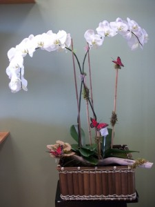 White orchid Combo  in Webster, TX | La Mariposa Flowers