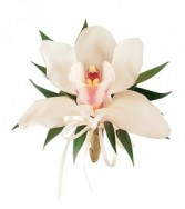 White Orchid HF1744