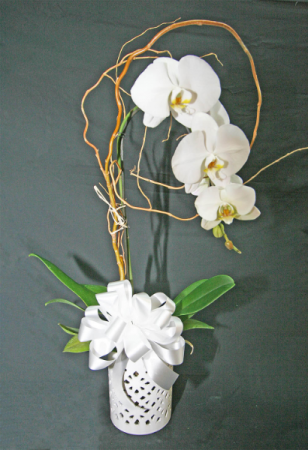 WHITE ORCHID IN WHITE VASE WITH BOW ORCHID