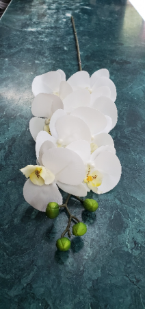 White Orchid Phalaenopsis  in New York, NY | PANY SILK FLOWERS